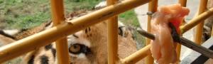 レッツ・ゴー・トゥー・上海野生動物園